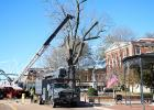 "The decaying oak tree on the south side of the Hardeman County Courthouse was removed on November 17. The bidded process cost nearly $7,000 according to Hardeman County Mayor Jimmy Sain and the work was done by Memphis Tree Service. The tree measured 6'8"" at the trunk."